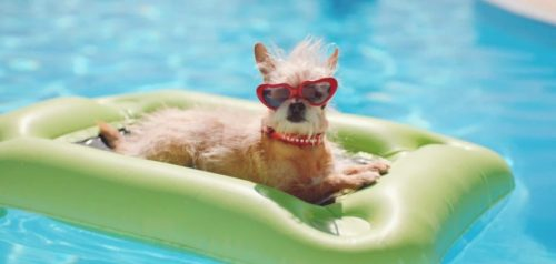 Dog-In-Swimming-Pool-Wearing-Sunglasses-Images-880x420
