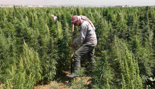 Lebanon's Cannabis Legalization